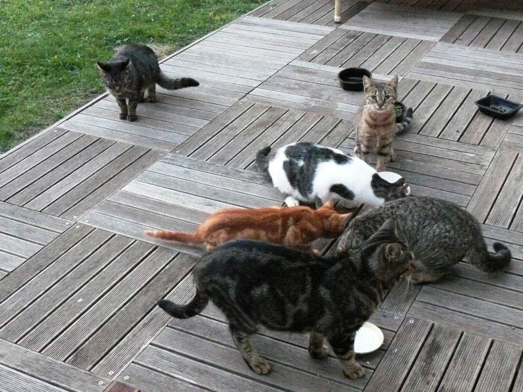 Le chat au service des bipèdes !