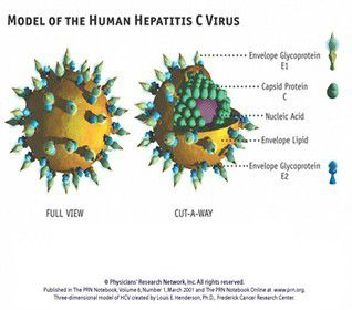 HEPATITIS C IN EGYPT ONE OF THE GREATEST IATROGENIC EPIDEMICS IN THE WORLD!