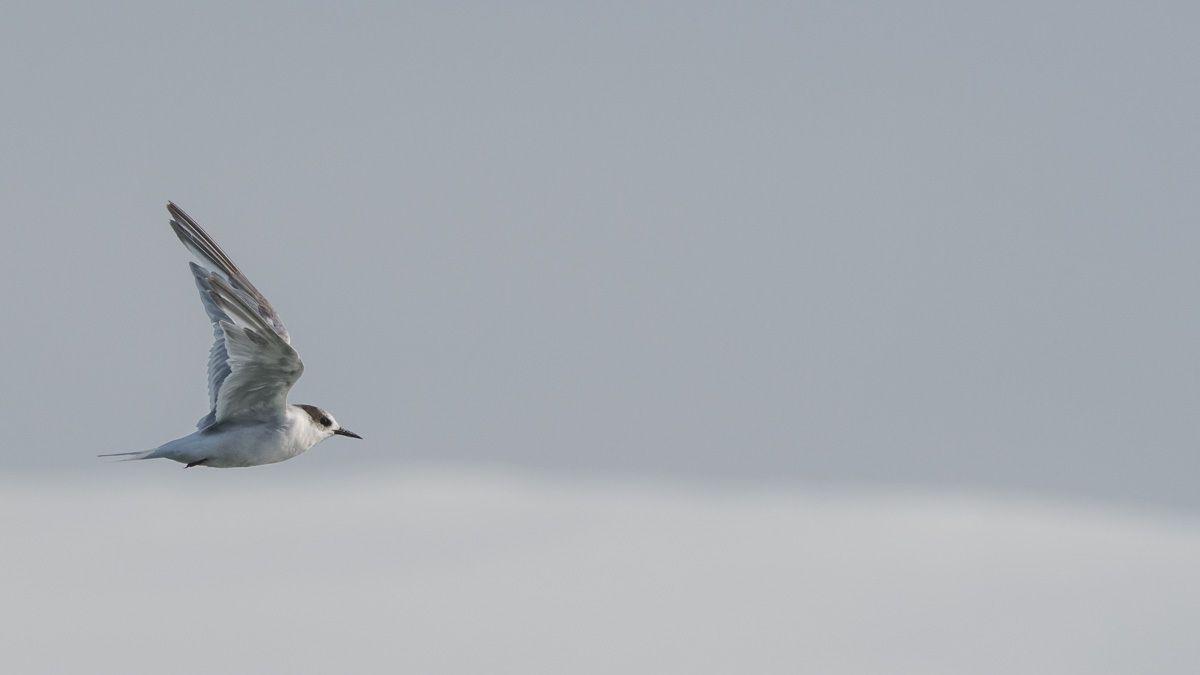 Pinnipédes, cétacés , Antarctique