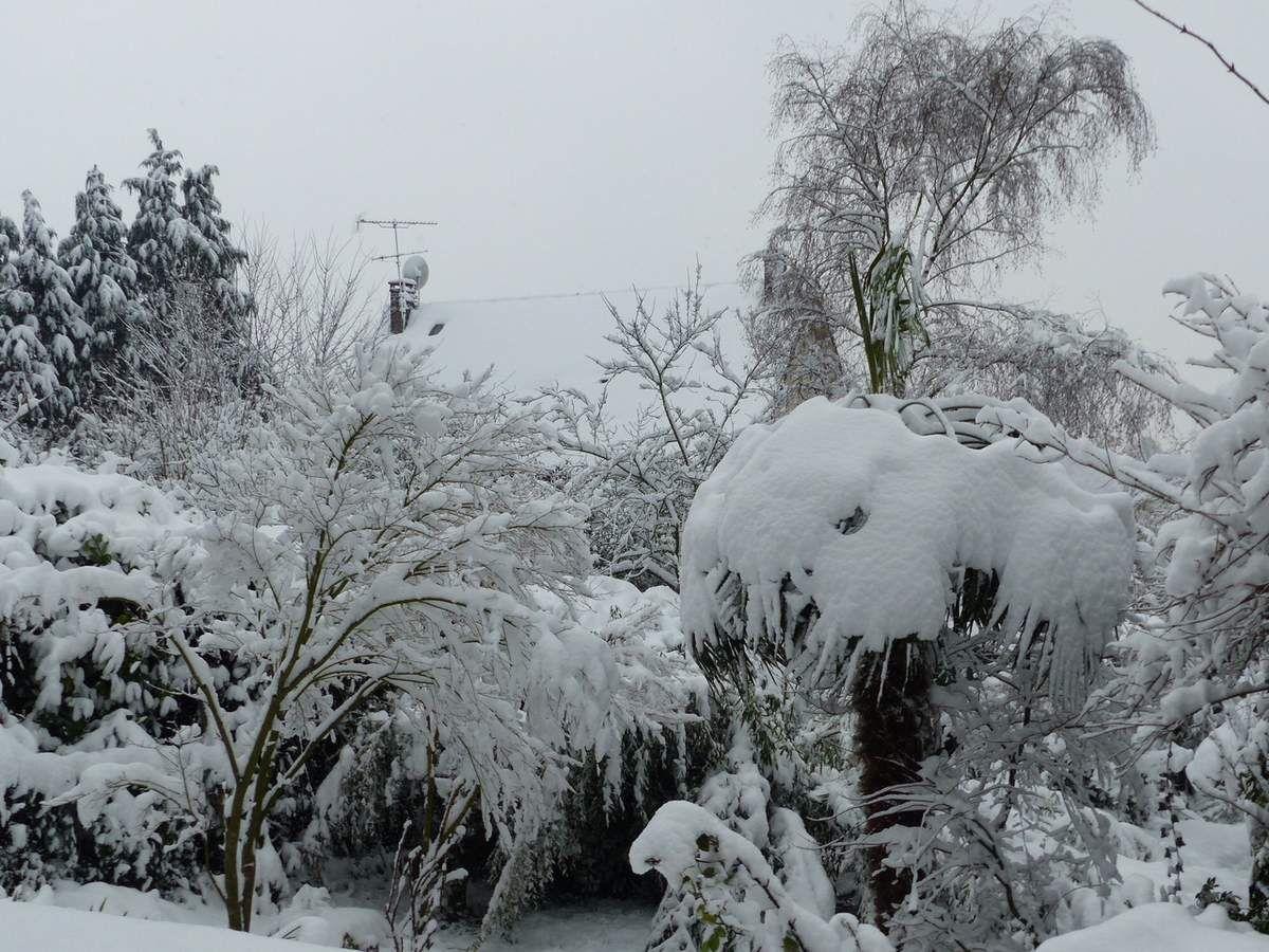 Bry sur Marne le 7 janvier 2018: la neige s'est installée dans les jardins bryards