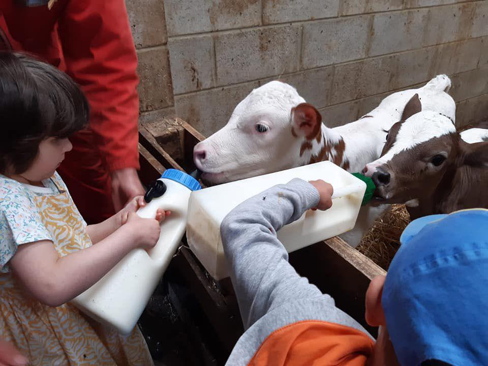 M2: Journée à la ferme