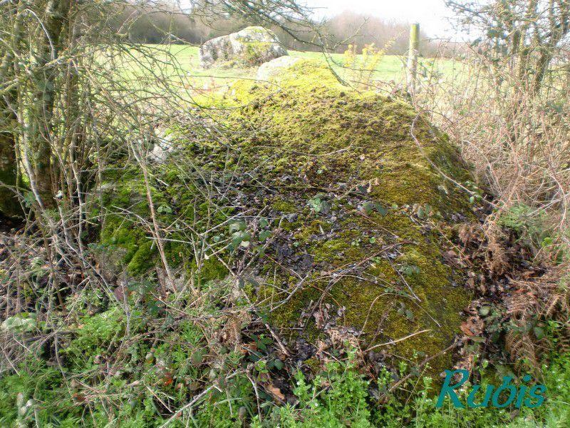 Rochers gravés de la Basse Permoulère et autres rochers, Chavagnes-en-Paillers