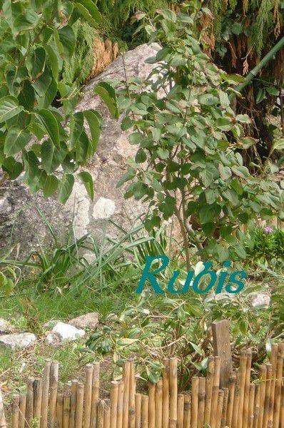 Mégalithe des Petites Vignes, Brem-sur-Mer