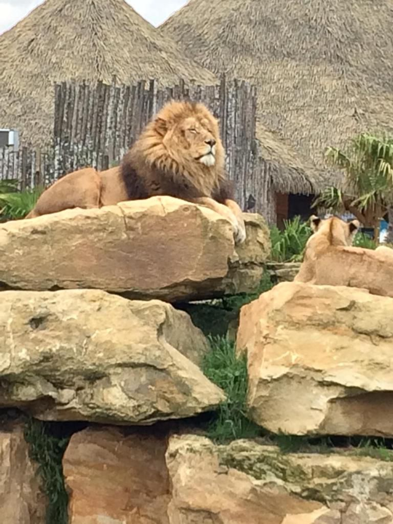 Courcimont au zoo de Beauval, suite...