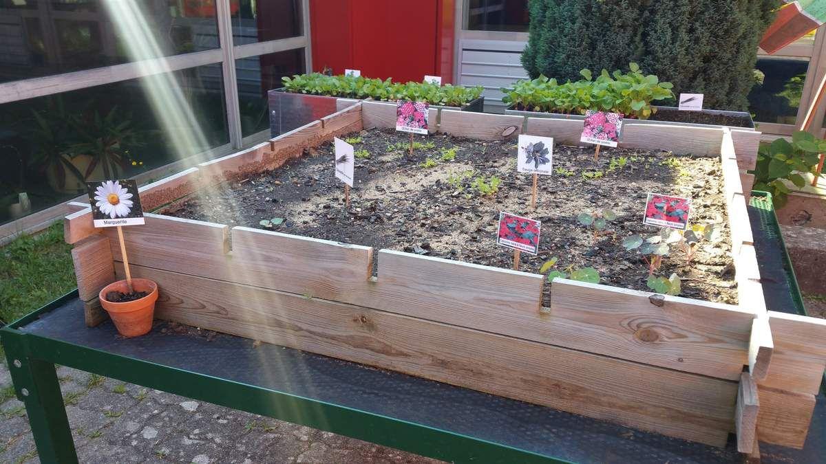 Des nouvelles de notre jardin-potager...