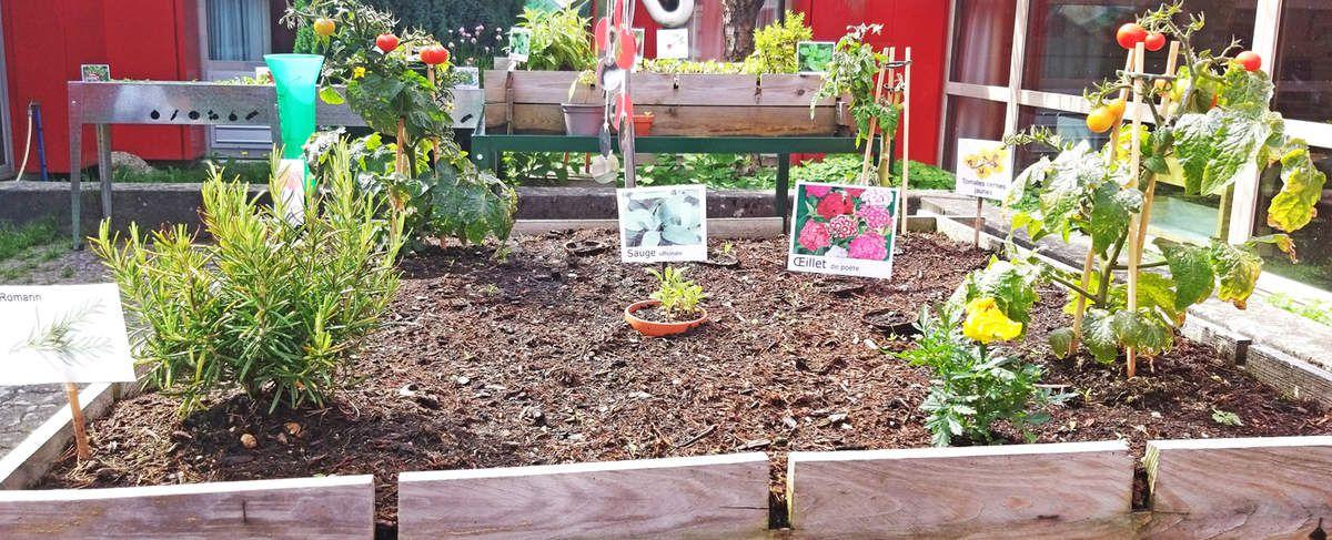 Quoi de neuf au verger et au jardin-potager?