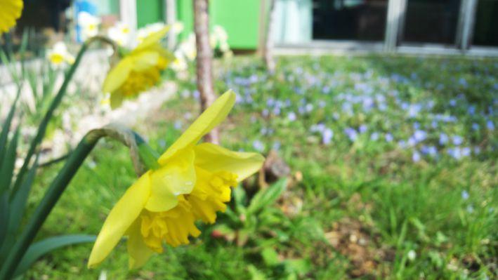 Le printemps déjà présent...