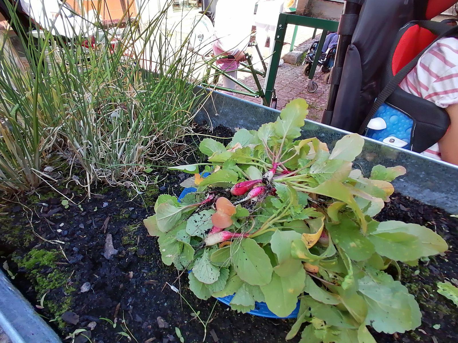 Cueillette et dégustation de nos fruits et légumes.