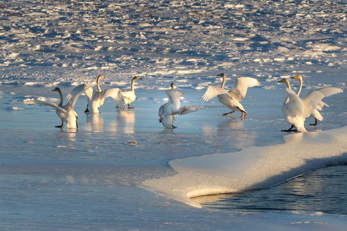Islande en hiver - Snaefellness - J2