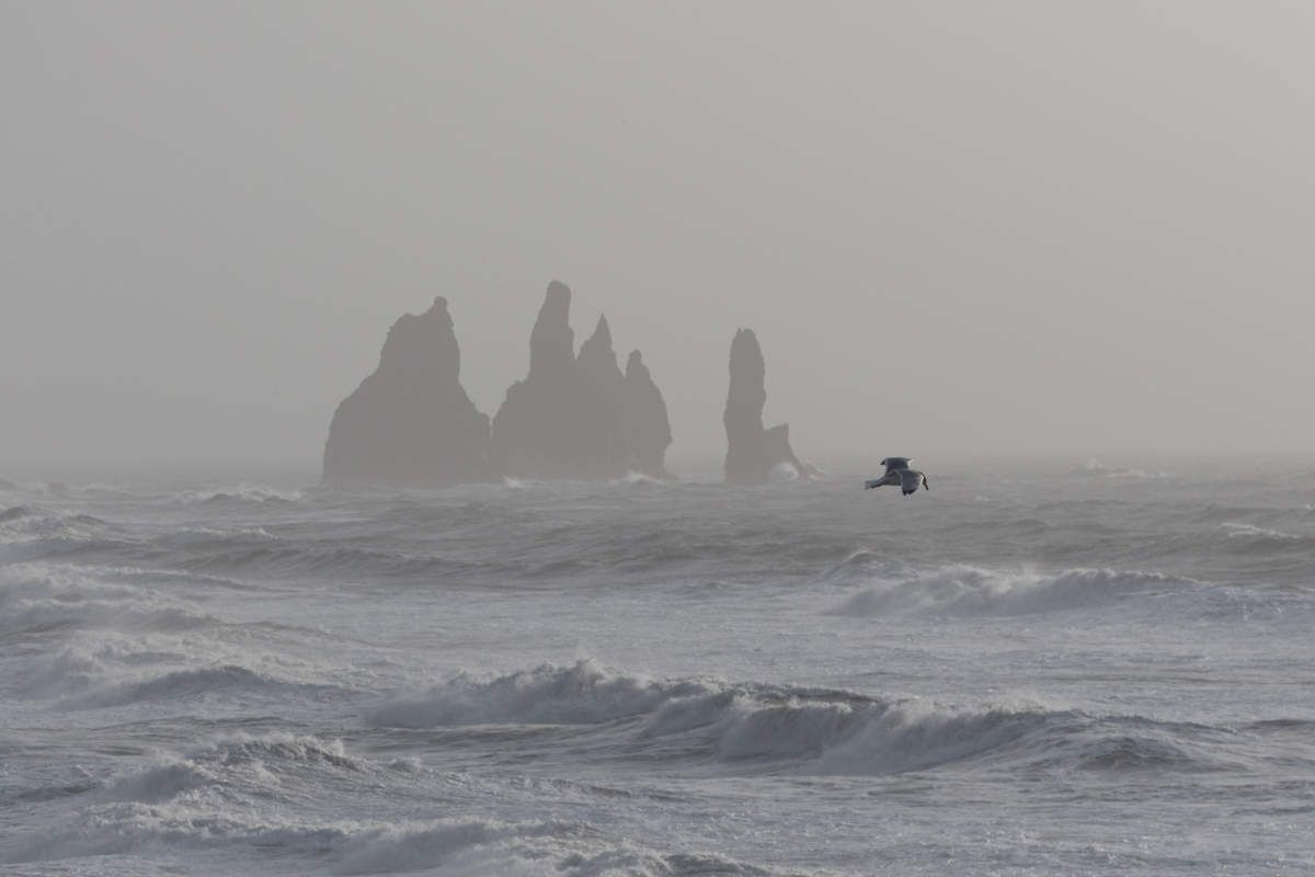 Islande en hiver - Cote Sud - J13 Reynisfjara et ses plages de sable noir