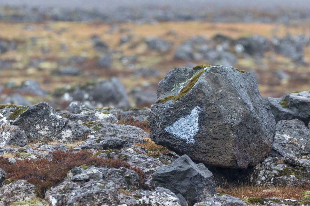 Islande en hiver - Cote Sud - J17 Chasse au lagopède et fin du voyage