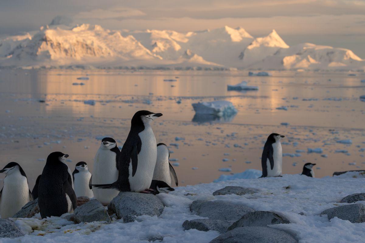 Antarctique - manchots et grosses bêtes