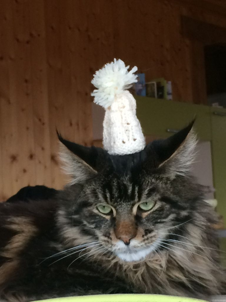 Un bonnet bien chaud !