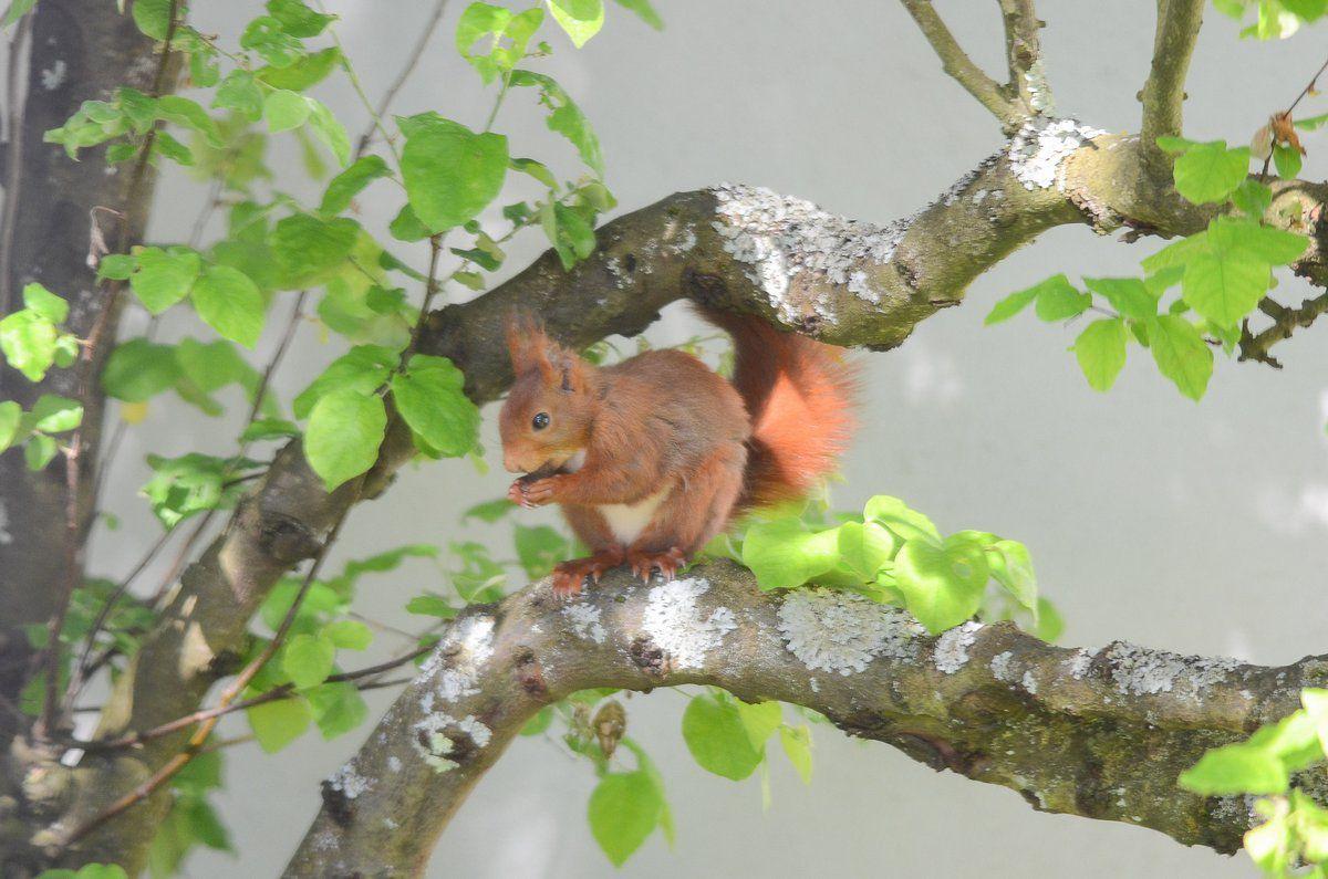 Ecureuil au jardin.suite