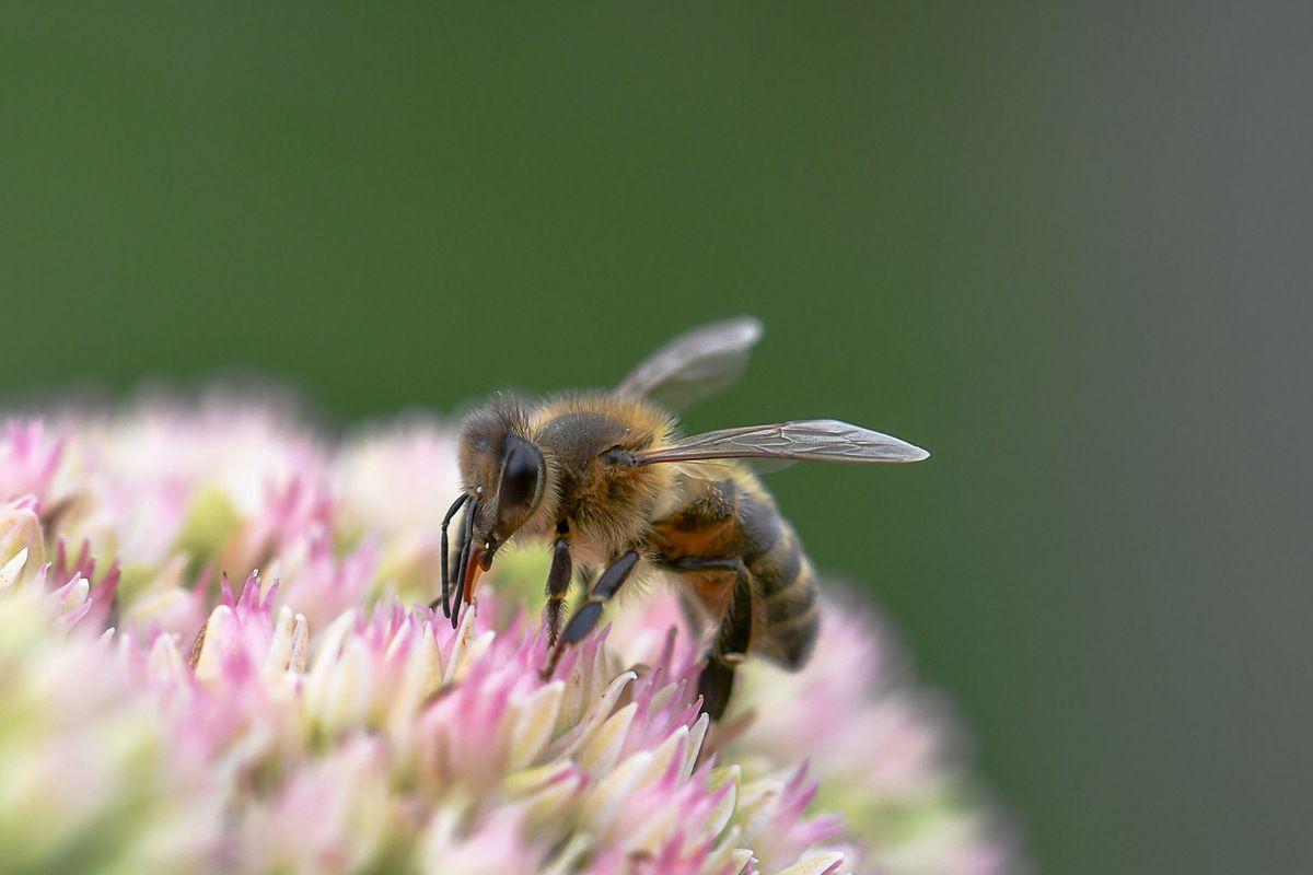Que  mangerions nous si ces espèces disparaissaient ??