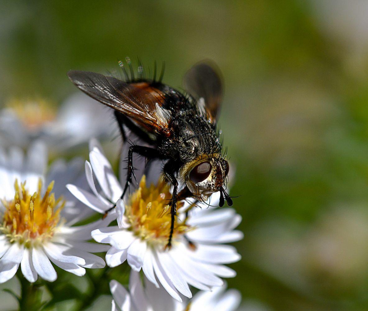 Insectes au jardin cet automne
