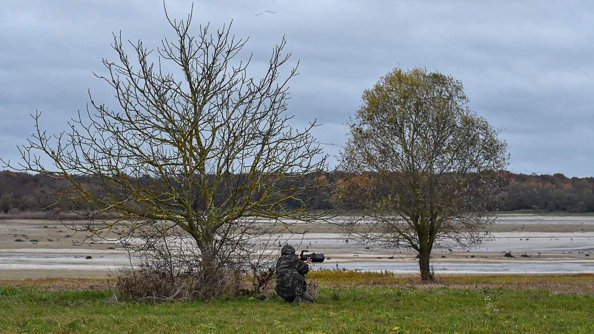 Les grues cendrées migrent de la Suède pour l'Espagne et font une halte en Champagne Ardennes à Montier en Der