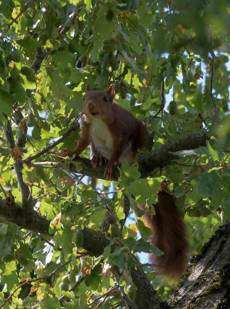 Les écureuils au jardin