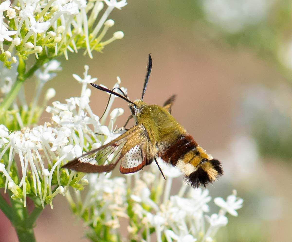 Ces magnifiques insectes au jardin