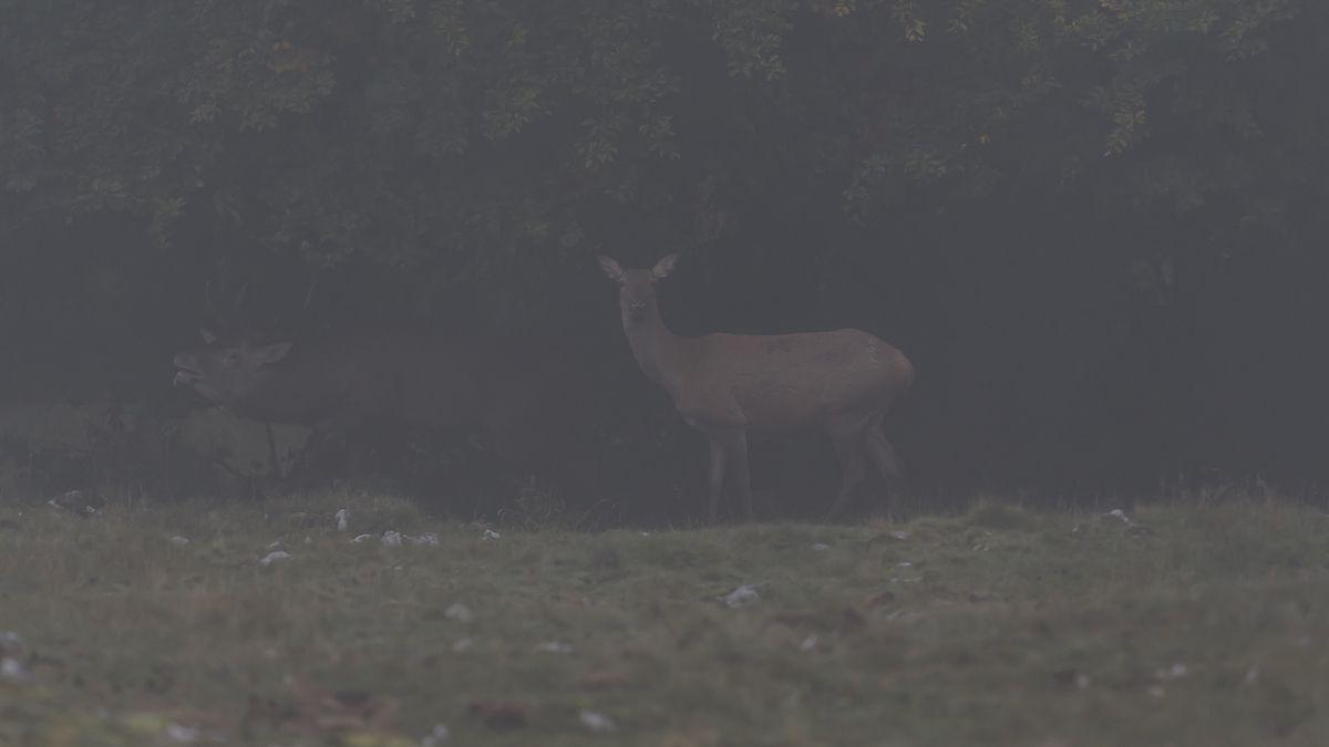 à la rencontre des cervidés dans le Parc Naturel Régional du Vercors