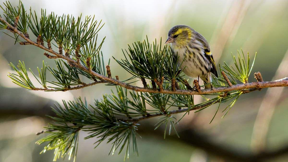 Les oiseaux aux mangeoires en hiver