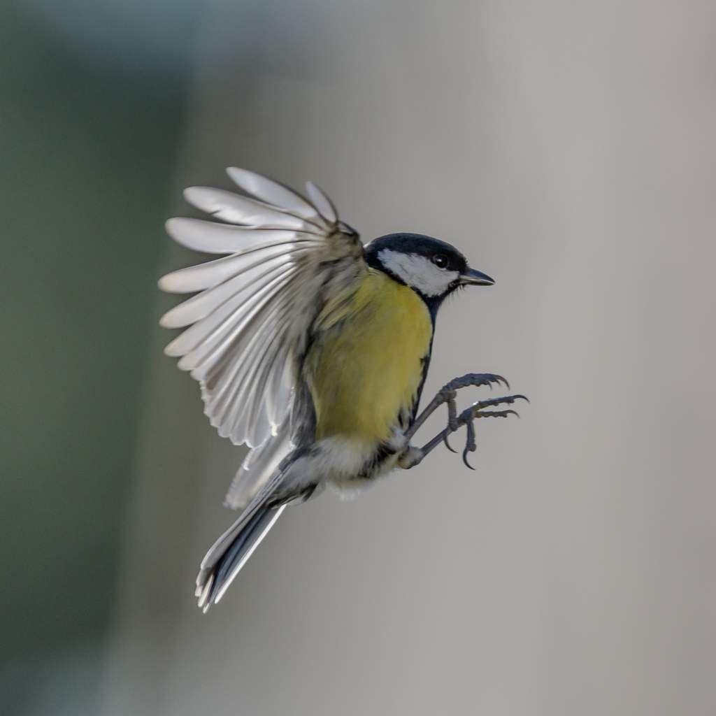 Les oiseaux aux mangeoires suite