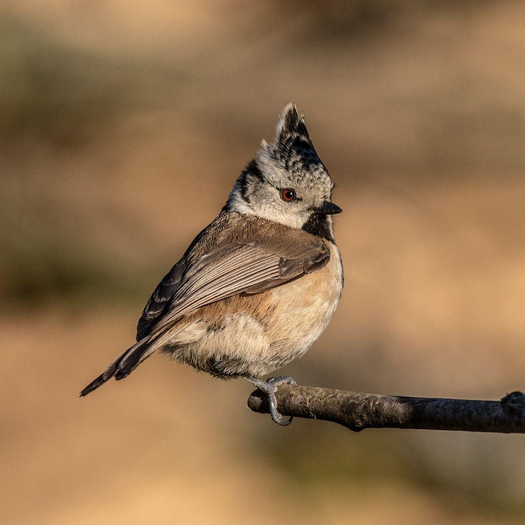 Les oiseaux à la mangeoire cet hiver