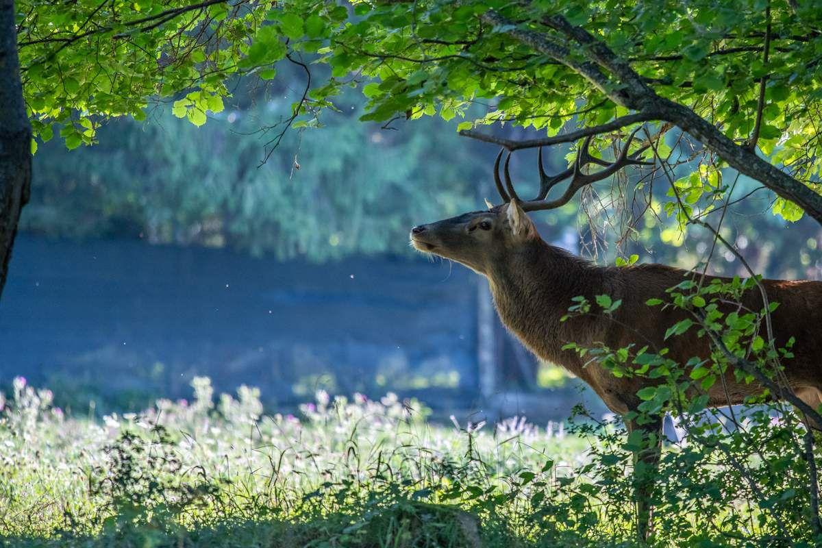 Parc National des Abruzzes mi septembre