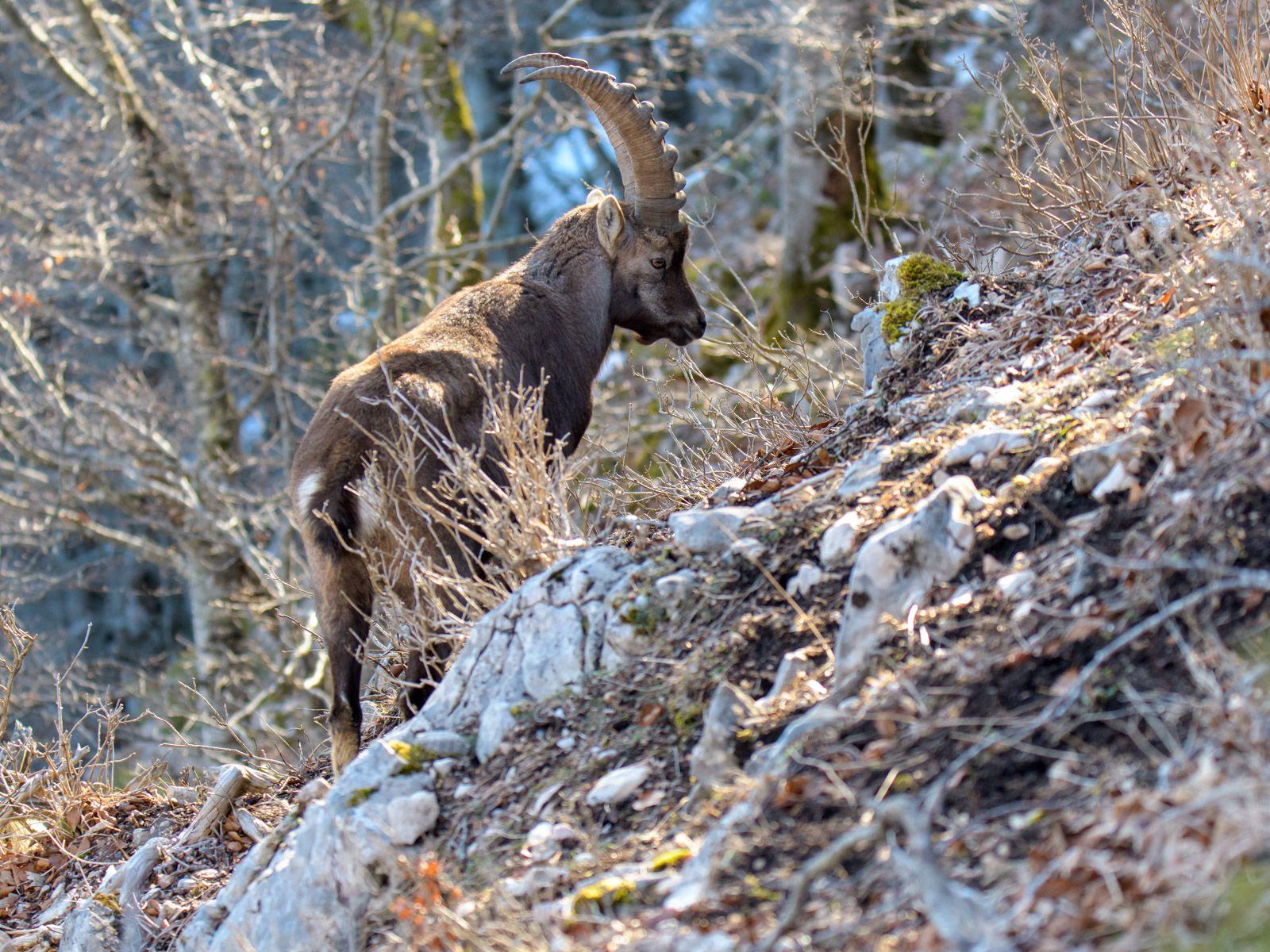 Un petit tour dans le Jura
