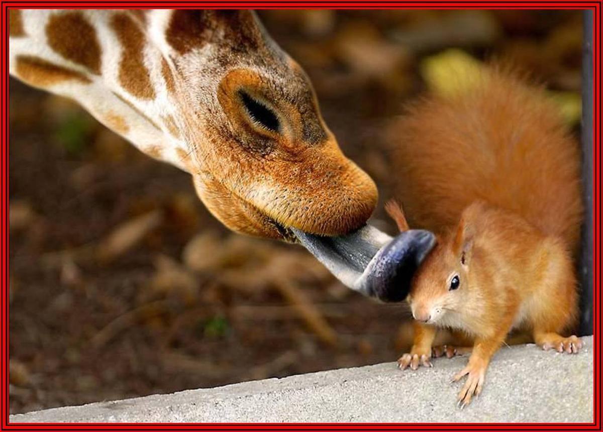 ob_653951_animaux-humour-tendresse