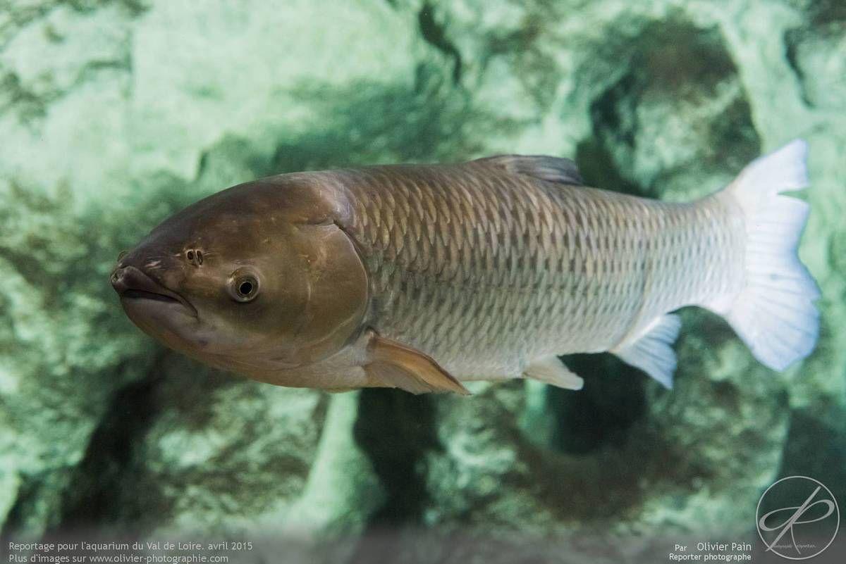 Reportage photo pour l'aquarium du val de loire.