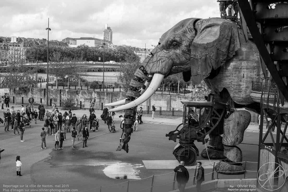 Les photos du jour, 14/05/2015 : Reportage à Nantes