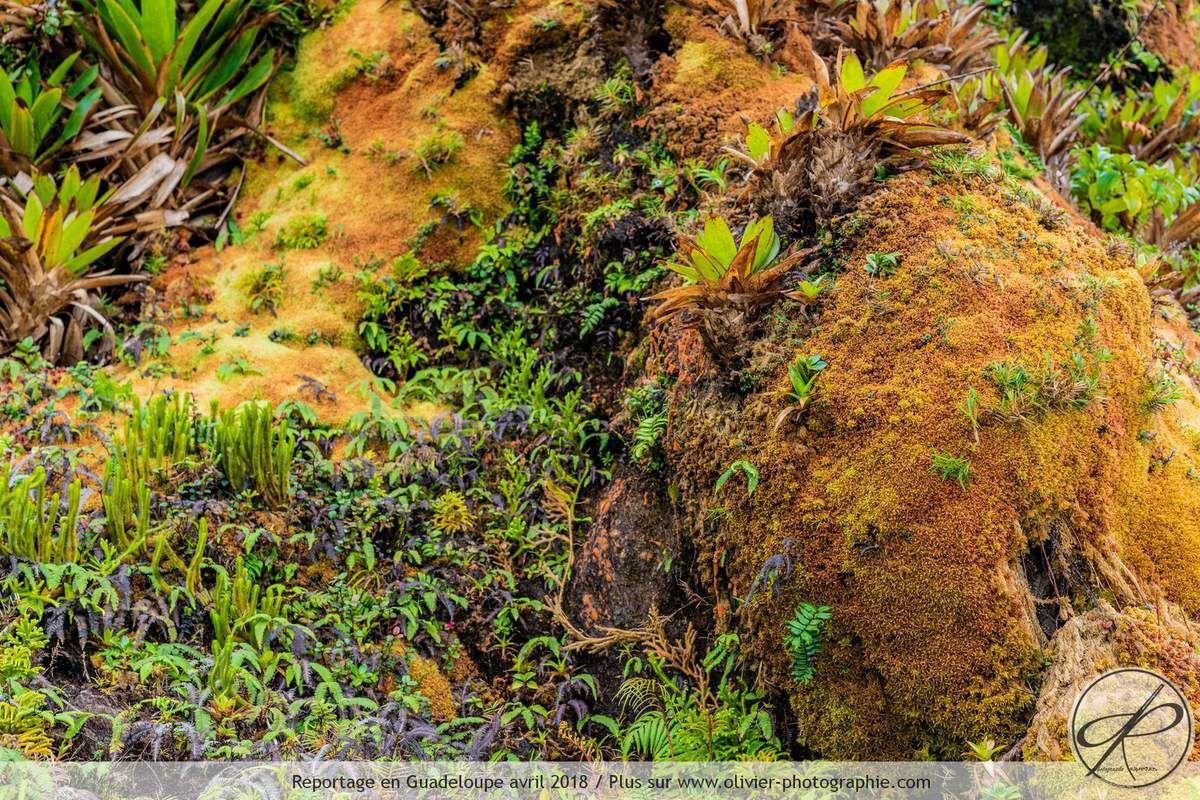 Photographies réalisées sur le Volcan la Soufrière en Guadeloupe