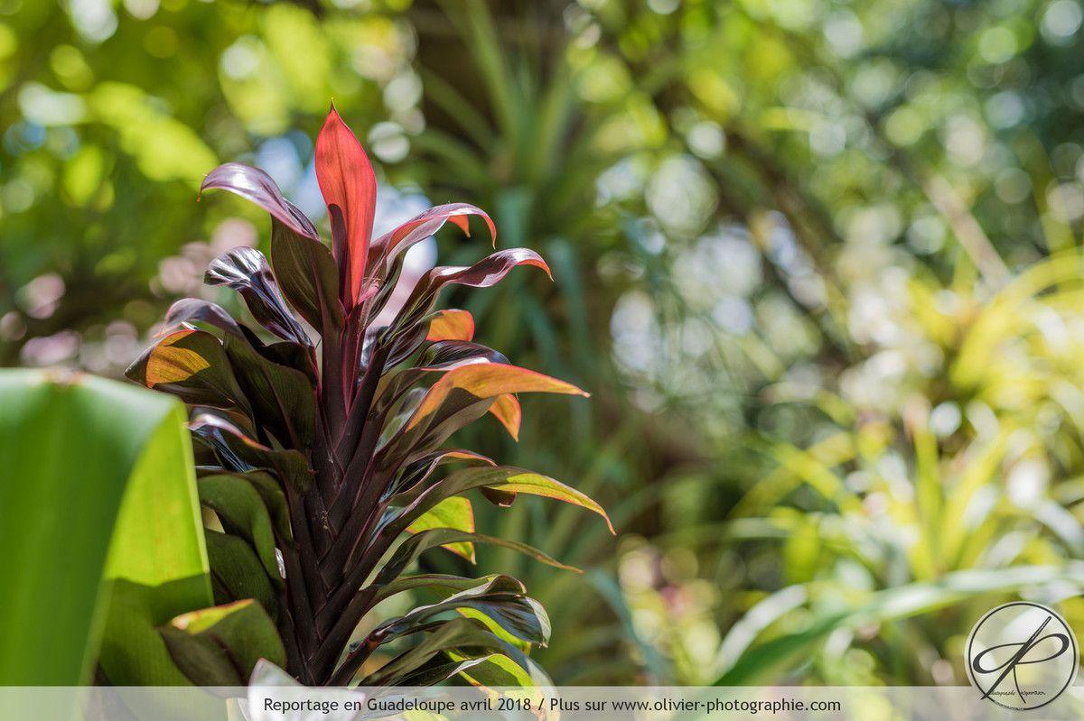 Photographies de la flore Guadeloupéenne