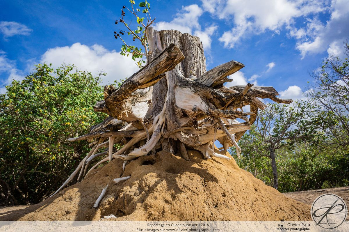 Reportage en Guadeloupe, nature et vie locale