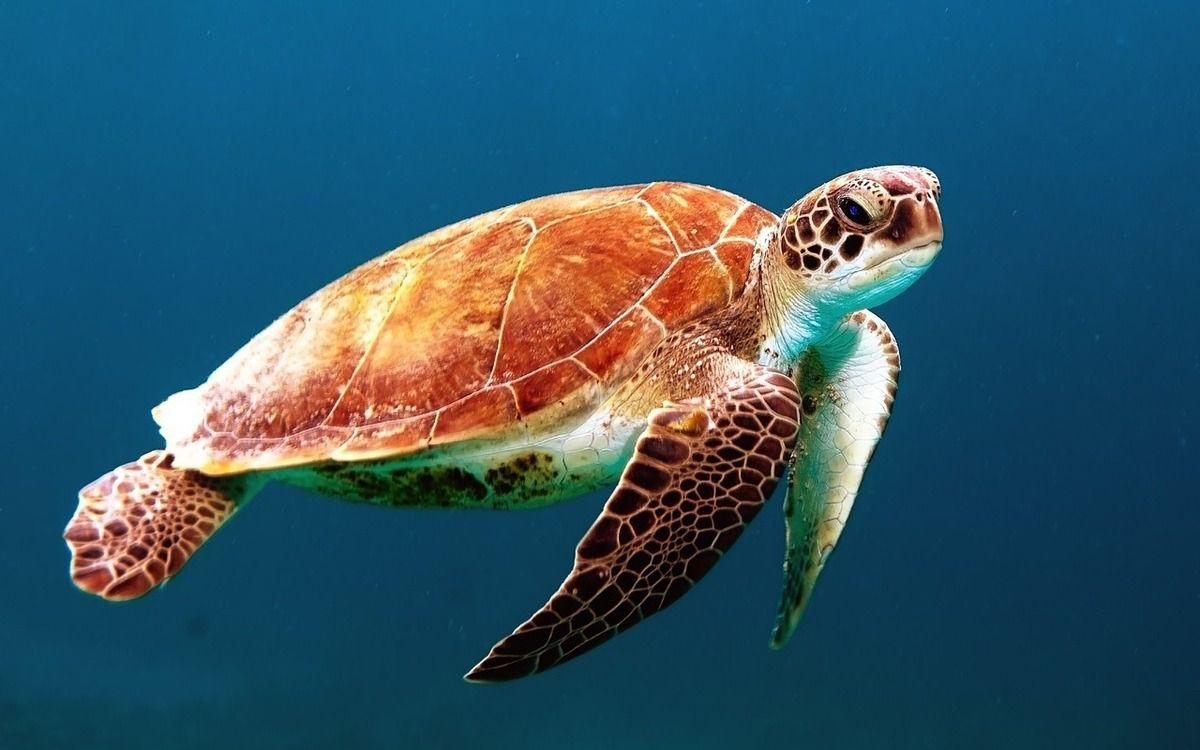 Alerte stage de rêve : partez veiller sur des tortues aux Maldives