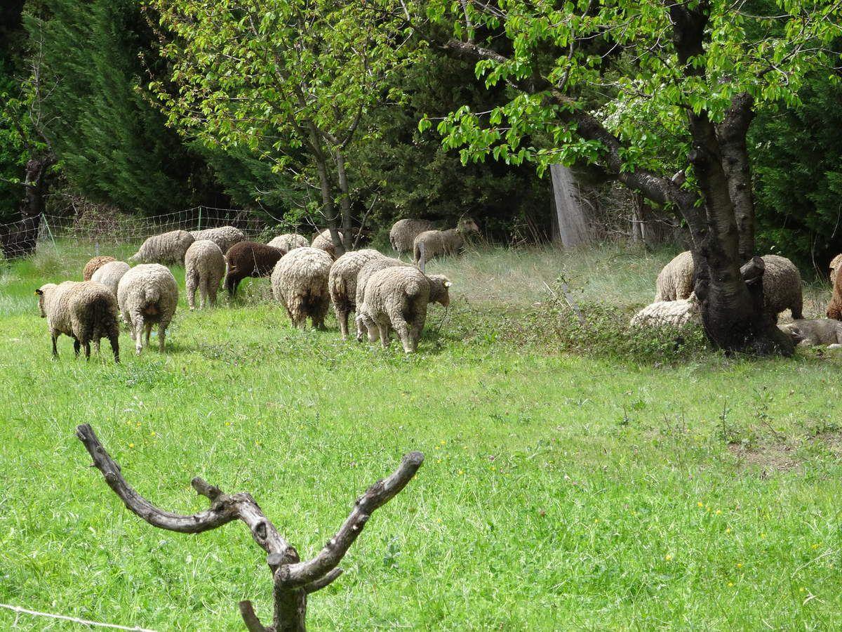 Opération de ferme en ferme