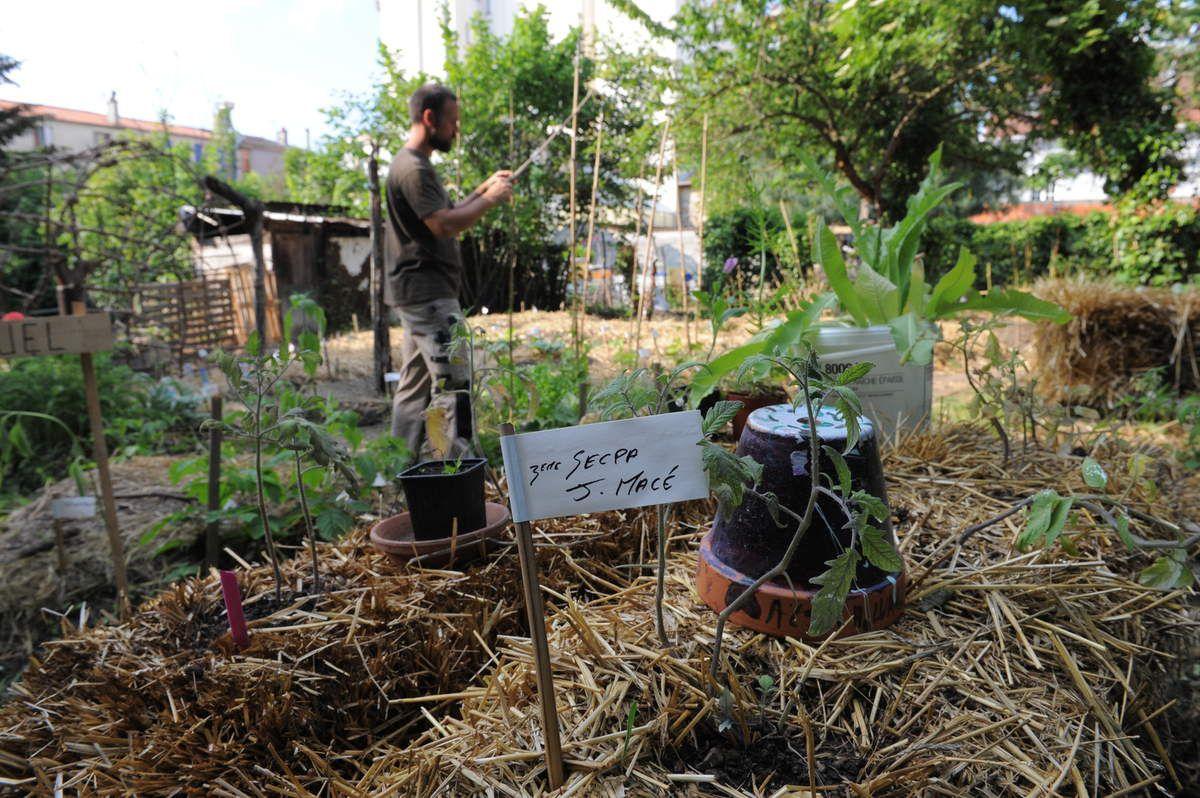Vous êtes les bienvenus le 26 et 27 mai au verger ! ambiance guinguette !Restauration cuisine maison et vente de confitures ,ateliers apiculture ,permaculture ,arbres fruitiers,compostage etc ...