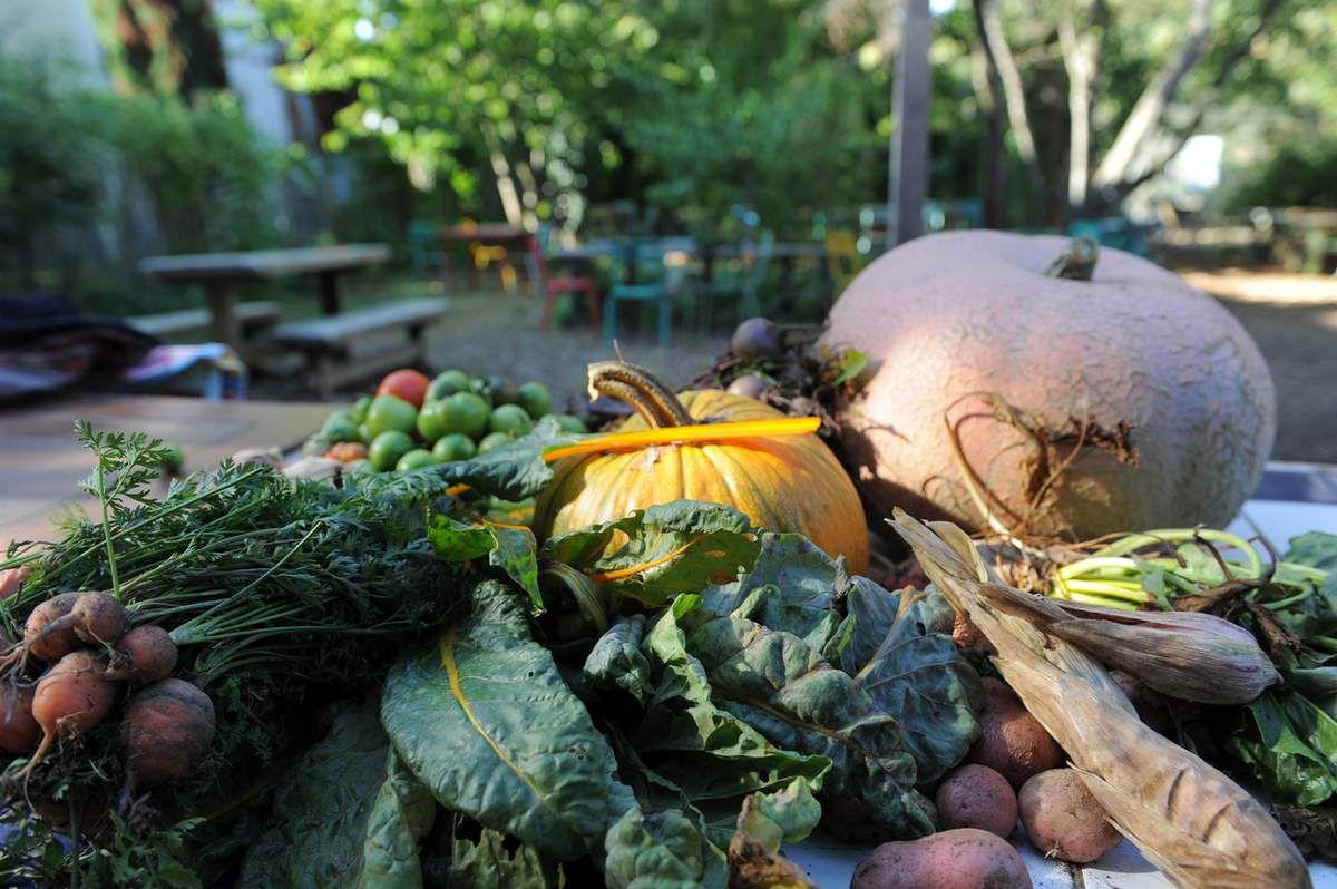 quelques légumes du jardin pour la soupe !!