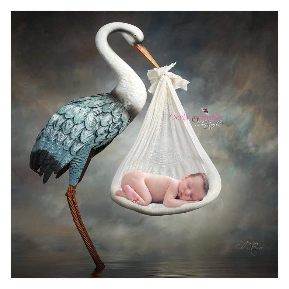 une cigogne apporte un nouveau-né à Castres