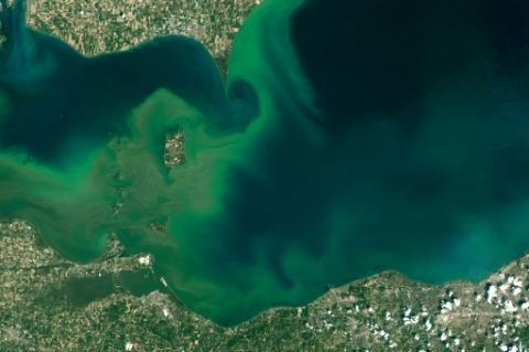ALERTE - Algues vertes, algues bleues: de nombreux milieux aquatiques étouffent