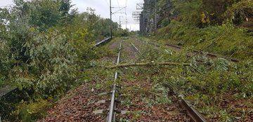 Plusieurs arbres sont tombés sur les voies près d'#Ancenis au passage de l'orage, ce qui a contraint à l'interruption des circulations sur l'axe #Nantes↔️#LeMans.