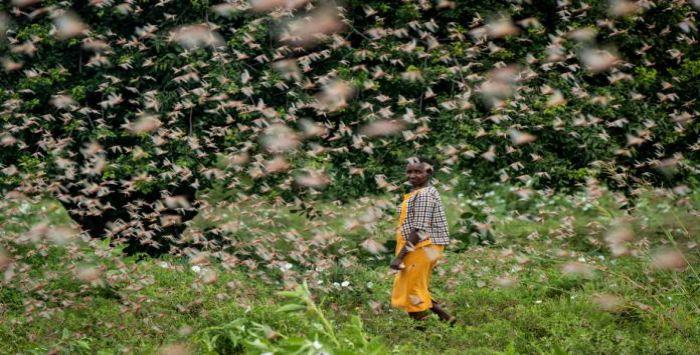 « Comme quelque chose sorti du livre de l'Exode » : Les armées de sauterelles dévorent des fermes entières au Kenya « en 30 secondes seulement » (Michael Snyder)
