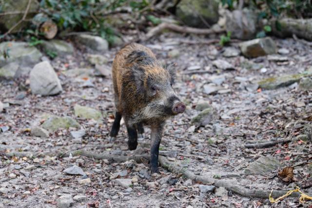 Coronavirus : des dizaines d'animaux morts mystérieusement dans la province de Hubei