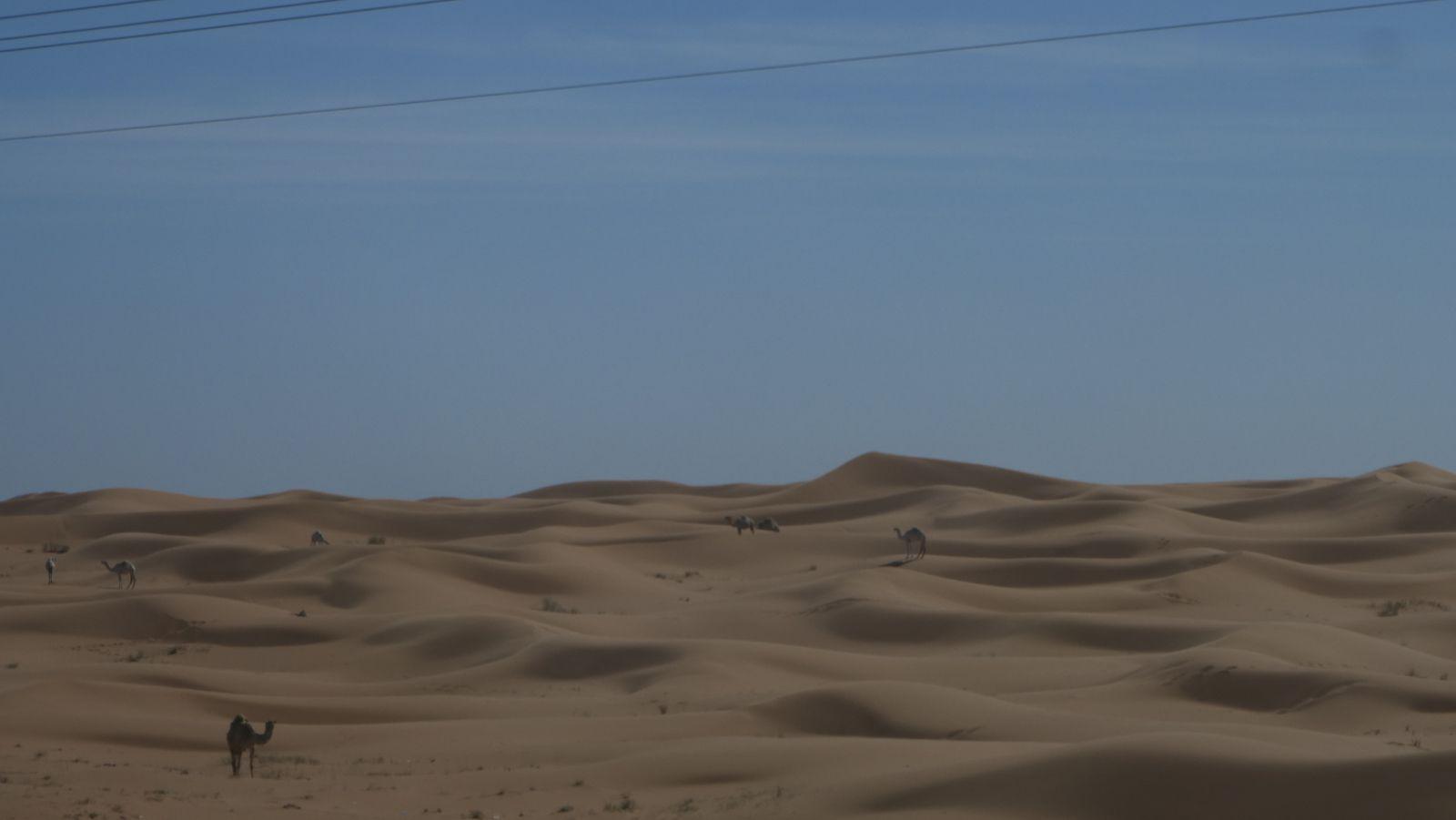 Sable, sable, sable...