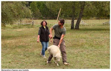 La houlette sert à attraper la brebis par la patte