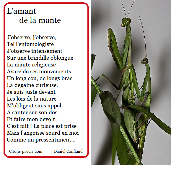 L'actu entomologiste de Citons-precis/citations : la mante religieuse, inlassable prédatrice