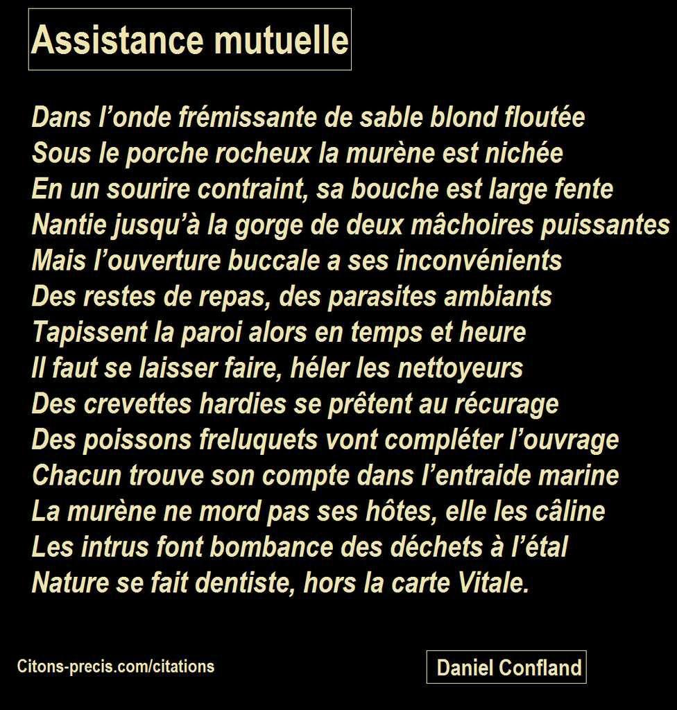 La murène et ses hôtes, les nettoyeurs de bouche, Pensée poétique : Assistance mutuelle, Daniel Confland