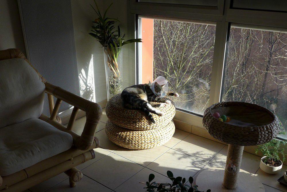 La sieste des chats...