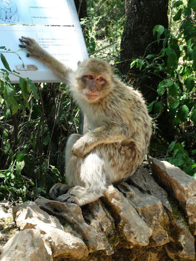 La forêt des singes à Rocamadour (2/3)...